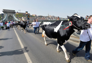Dairy farmers demonstrate for more subsidies in Budapest