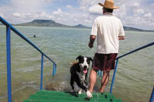 Dog-friendly beach opens in Fonyód