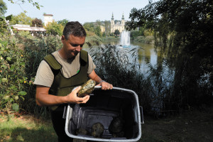 Non-indigenous turtles being moved from Bottomless Lake to Budapest Zoo
