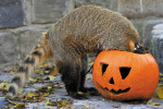 Halloween in Budapest Zoo