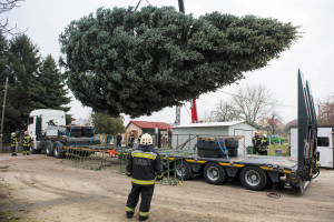 Nation's Christmas tree erected in front of Parliament