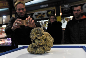 Millions of forints worth of truffle found in Baranya County