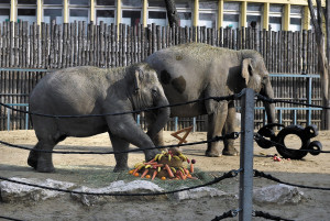 Asha gets a special 4th birthday treat in the Budapest Zoo